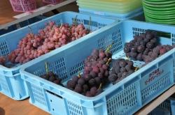 ぶどうとワインの町『勝沼』散策・ぶどうの丘