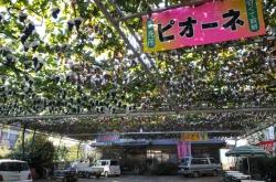 ぶどうとワインの町『勝沼』散策・三沢園