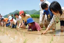 子ども田植え体験風景