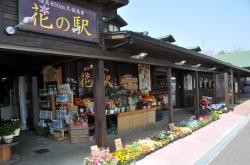 くじゅう花公園・花の駅