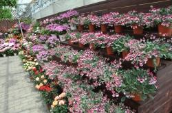 くじゅう花公園・天候に左右されない温室「アンティル」