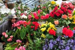 久住高原フラワーズヴァレー&喫茶 空・400種以上の色とりどりの花を一年中鑑賞できる