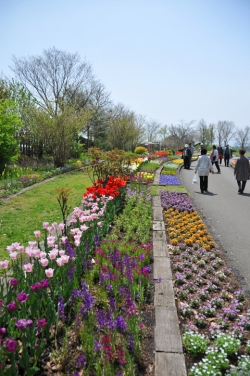 くじゅう花公園・イメージ