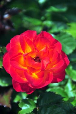 ヒバリカフェ・庭の花
