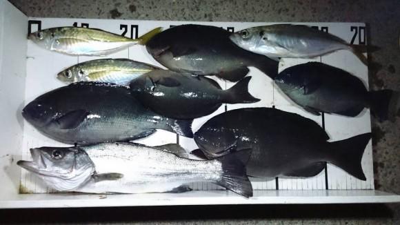 一つ神 日向市平田さんの釣果画像