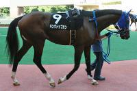 宮崎競馬100年記念