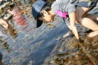 川の生物ウォッチング2